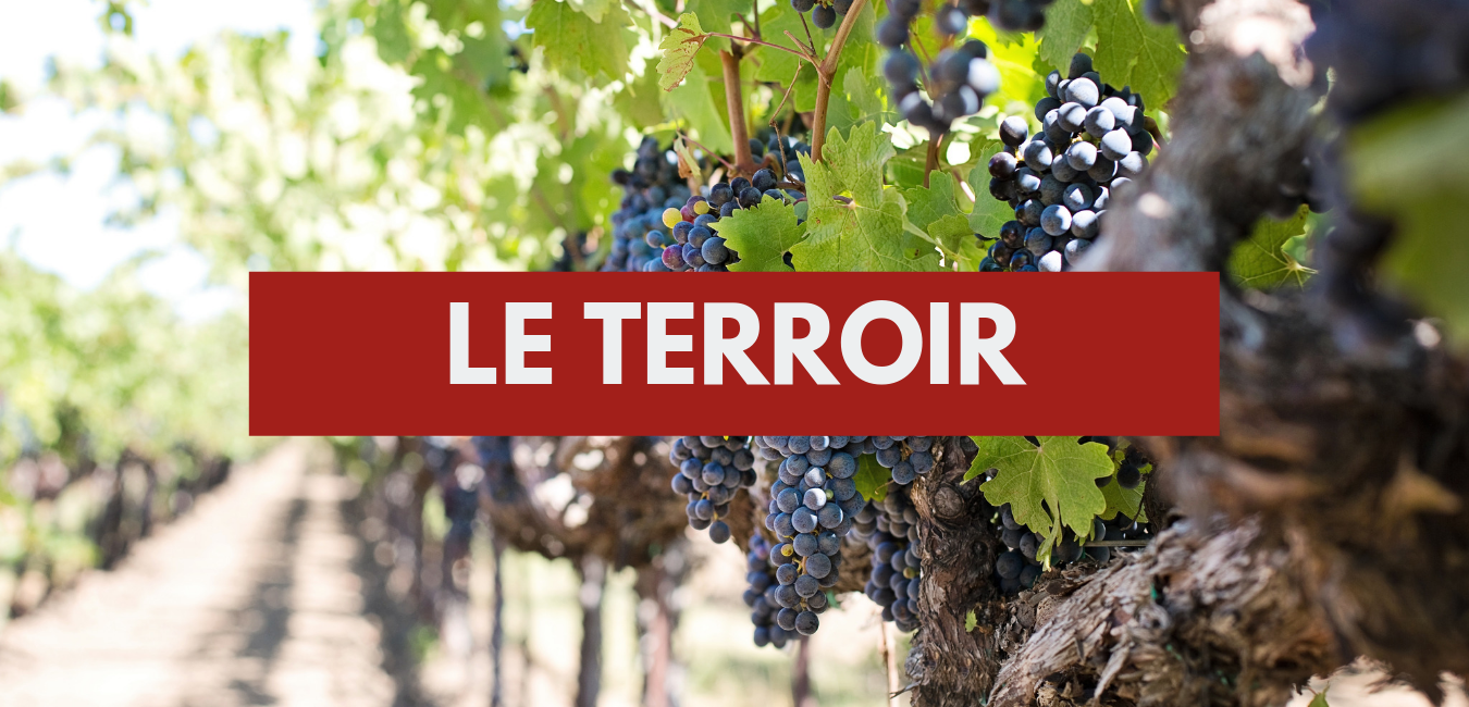 You are currently viewing Le terroir
