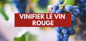 Vinifier le vin rouge
