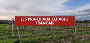 Les principaux cépages français