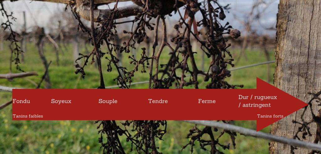 échelle tanins dans le vin