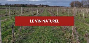 Le vin naturel – Découvrez le vin nature !