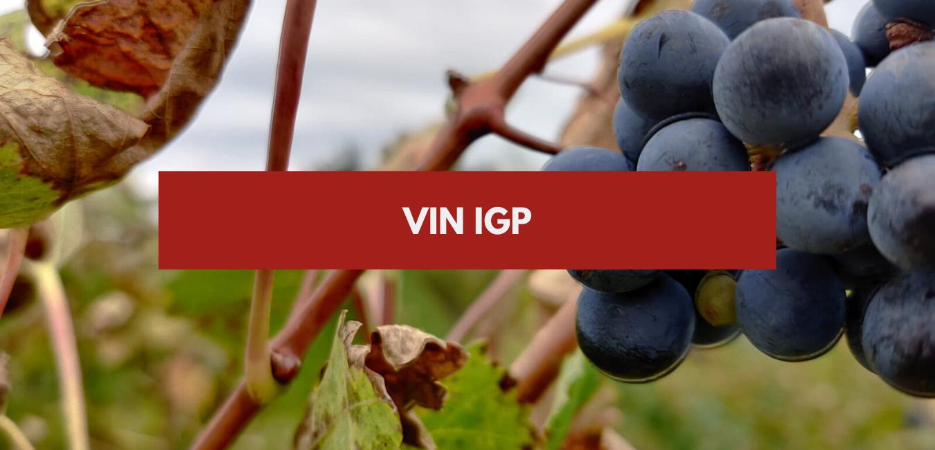 Vin IGP