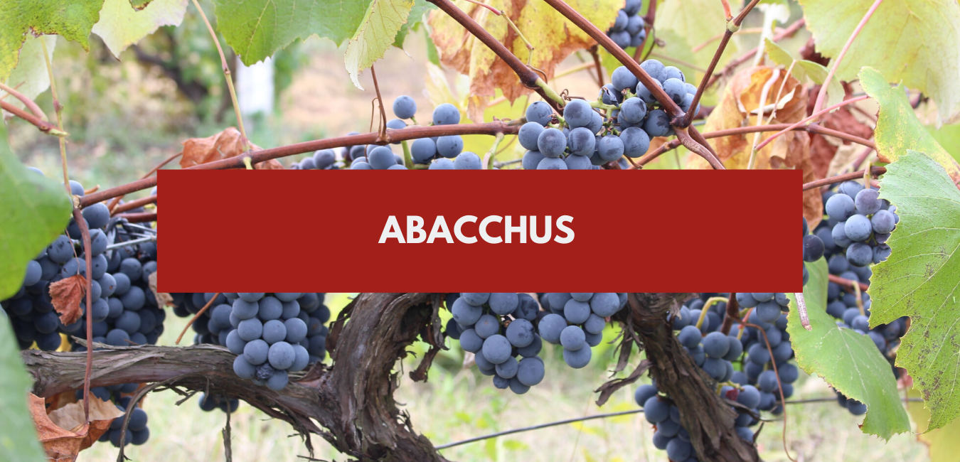 You are currently viewing Abacchus