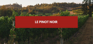 Le Club #11 – Pinot Noir