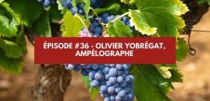 Épisode #36 – Olivier Yobrégat, Ampélographe