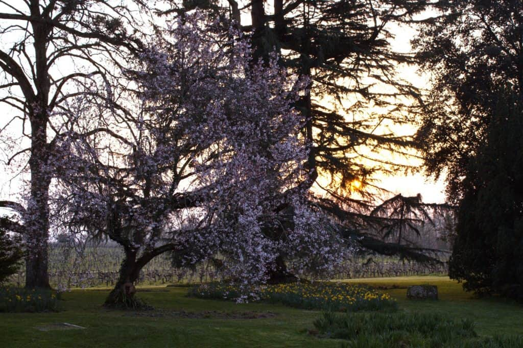 Parc arbres Château de Ferrand